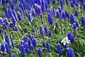 Botanic garden - Cluj-Napoca (4543576625).jpg
