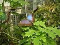 Botanic garden - Joensuu - panoramio.jpg