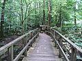 Brücke über den Holzbach.JPG
