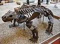 Bradysaurus seeleyi, Munich, 2017-09-11.jpg