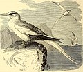 Brehms Tierleben - allgemeine Kunde des Tierreichs - mit 1800 Abbildungen im Text, 9 Karten und 180 Tafeln in Farbendruck und Holzschnitt (1892) (20388471186).jpg