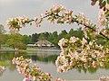 Britzer Garten - Fruehling (Britz Garden - Springtime) - geo.hlipp.de - 36179.jpg