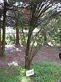Briukhovychi Arboretum (8).jpg
