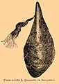 Brockhaus and Efron Encyclopedic Dictionary b46 815-1.jpg