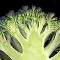 Brocoli-fleurs.jpg