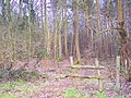 Broken Stile near Brickyard Plantation - geograph.org.uk - 1703022.jpg