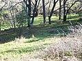 Browns Ravine 623 - panoramio.jpg