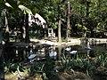 Bucuresti, Romania, Parcul Cismigiu; B-II-a-A-19655 (Lacul Lebedelor 5).JPG