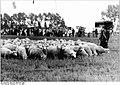 Bundesarchiv Bild 183-1986-0731-026, Wettstreit im Hüten.jpg