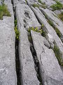 Burren (caruth).jpg