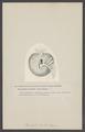 Bursatella - Print - Iconographia Zoologica - Special Collections University of Amsterdam - UBAINV0274 005 08 0036.tif