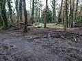 Bushy Park, Dublin -146456 (46478359971).jpg