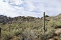 Butcher Jones Trail to Pinter's Point Loop, Tonto National Park, Saguaro Lake, Ft. McDowell, AZ - panoramio (63).jpg