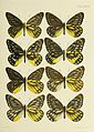 Butterflies from China, Japan, and Corea (PL. XXXVII) BHL45490999.jpg