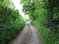 Byway to Little Pipers Wood - geograph.org.uk - 1292593.jpg