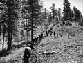 CCC enrollees being trained in fire line construction near Idaho City, Idaho (3226032351).jpg