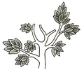 COM V1 D057 Tree from ancient MS.png