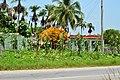 CUBA - panoramio (65).jpg