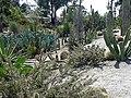 Cactus garden at Balboa park.jpg
