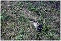 Caldeiras - panoramio (2).jpg