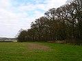 Calves Field Wood - geograph.org.uk - 360562.jpg