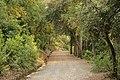 Camí del Salze - panoramio.jpg