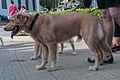 Caminata por los perros y animales Maracaibo 2012 (29).jpg