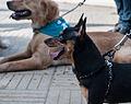 Caminata por los perros y animales Maracaibo 2012 (42).jpg