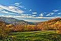 Campo largo - panoramio.jpg