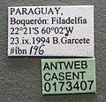 Camponotus crassus casent0173407 label 1.jpg