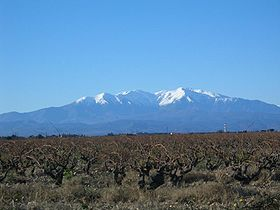 A snow-capped Canigou across the Roussillon plain.