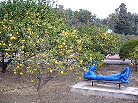 citronnier et sculpture