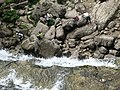 Cascades du Hérisson (6045613596).jpg