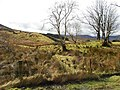 Cashel Townland - geograph.org.uk - 1770381.jpg