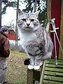 Cat on handrail.jpg