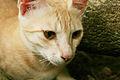 Cat public domain dedication image 0003.jpg