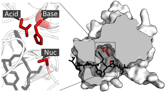 Catalytic triad - Image: Catalytic triad of TEV protease