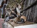Cats September 27, 2006 (1).jpg