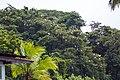 Cattle egret (30036233684).jpg