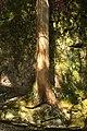 Cedar Grow Anywhere - Wood (6117862475).jpg