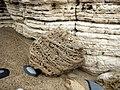 Cellular patterns in boulder of magnesian limestone - geograph.org.uk - 1530632.jpg