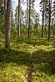 Central Finland, Finland - panoramio (22).jpg