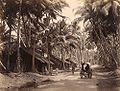 Charles T Scowen Landscape in Ceylon 1870s.jpg