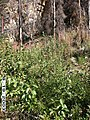 Charley River Water Quality Testing, Yukon-Charley Rivers, 2003 3 (c08d5066-107a-45b1-9772-b8bab8450c77).jpg