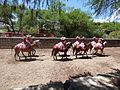Charreada en El Sabinal, Salto de los Salado, Aguascalientes 05.JPG
