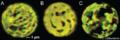 Chloroplast 3.png