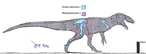 Description de l'image Chuandongocoelurus.jpg.