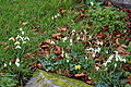 Church of St Mary, Stapleford Tawney, Essex, England - snowdrops 1.jpg