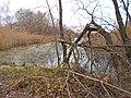 Chyhyryns'kyi district, Cherkas'ka oblast, Ukraine - panoramio (31).jpg