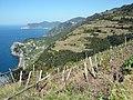 Cinque Terre, La Spezia, Liguria, Italy - panoramio.jpg